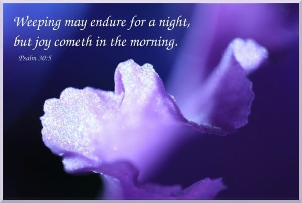 Weeping may endure for a night but joy cometh in the morning an image of a purple flower