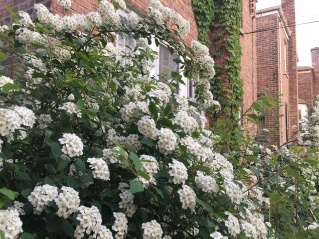 Pictures of beautiful flowers in Chicago during the summer months. 10 things to do in Chicago